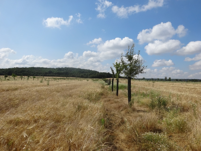 Agroforesterie en Seine-et-Marne - Ferme de Chalmont, Fleury en Bière