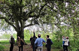 Arboformation - Reconnaître les arbres